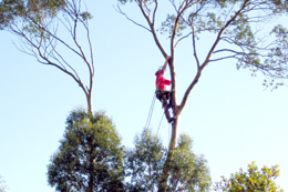 tree-surgeon-truro